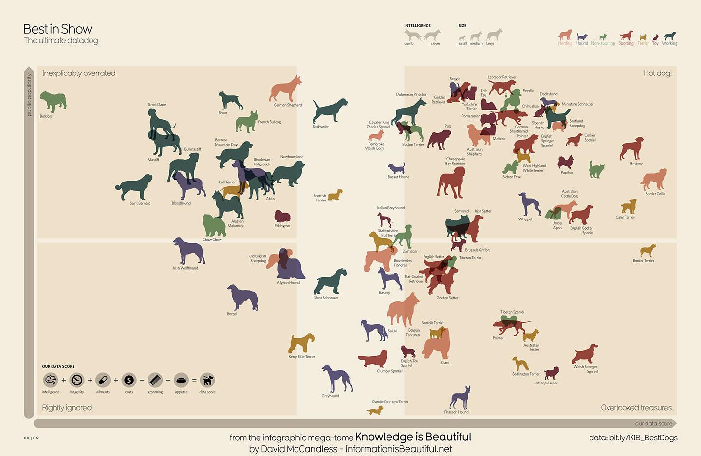 Dog Good Diagrams - Schematics Wiring Diagrams •