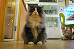 cat%20cafe%20030414.jpg