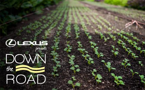 Lexus_RoadSign_lines.jpg