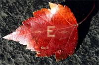 leaf8%3A26.jpg