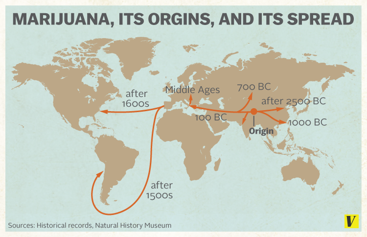 Wild Cannabis Likely Came from China