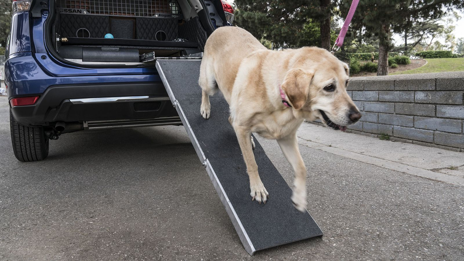 Is nissan 39 s rogue dogue a good place to put dogs or a dog prison on wheels the verge - Dogs for small spaces concept ...