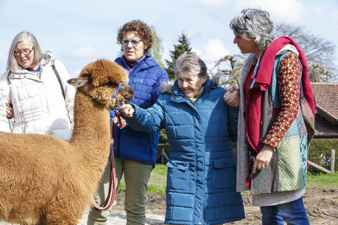 Shearing an alpaca: the dos and don'ts