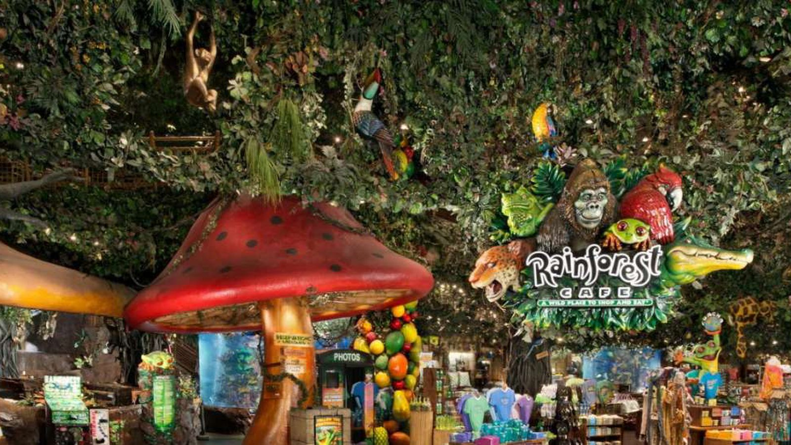 Rainforest Cafe San Francisco Birthday Party