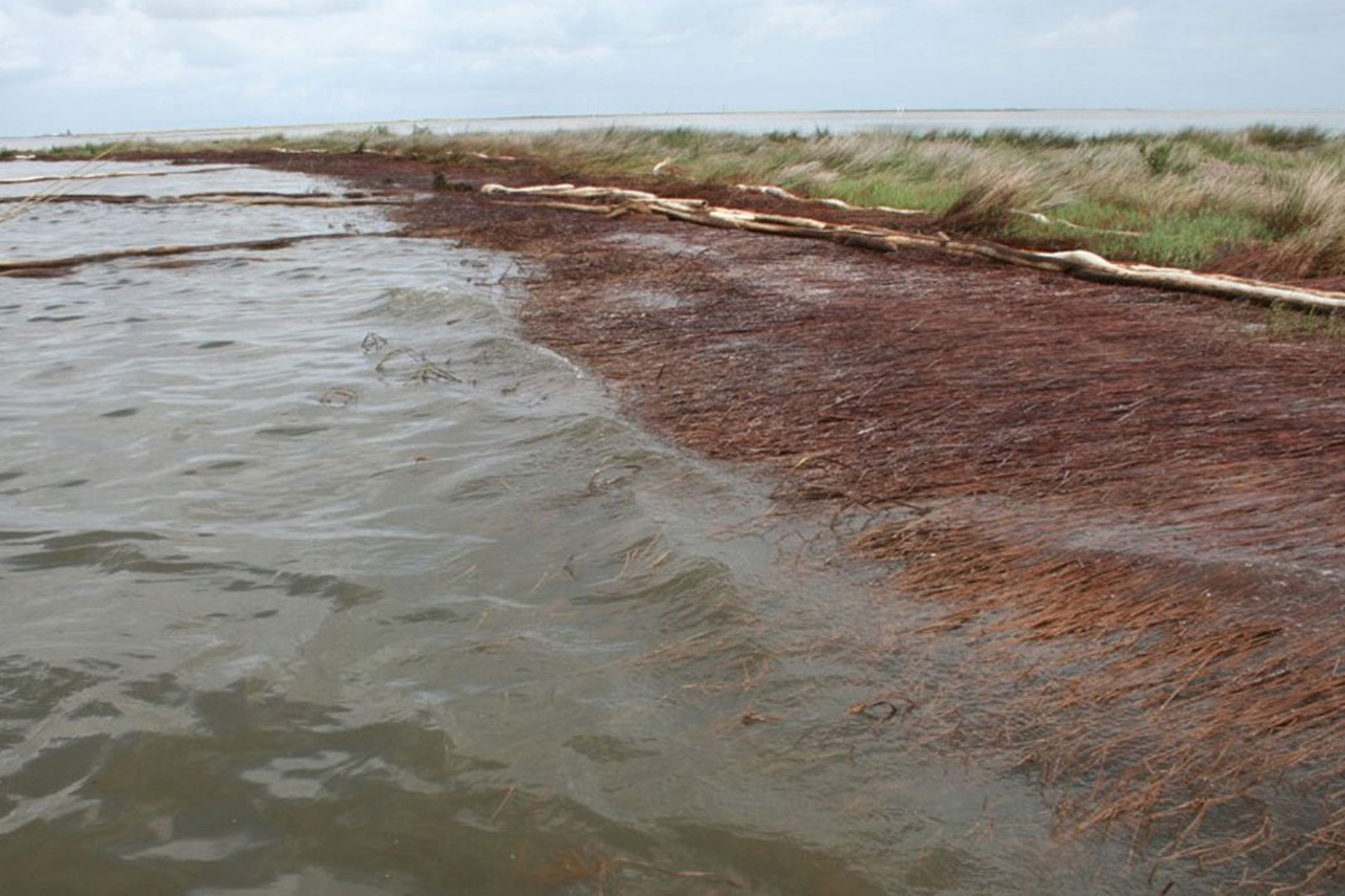 The 2010 Deepwater Horizon oil spill caused widespread land erosion in Louisiana thumbnail