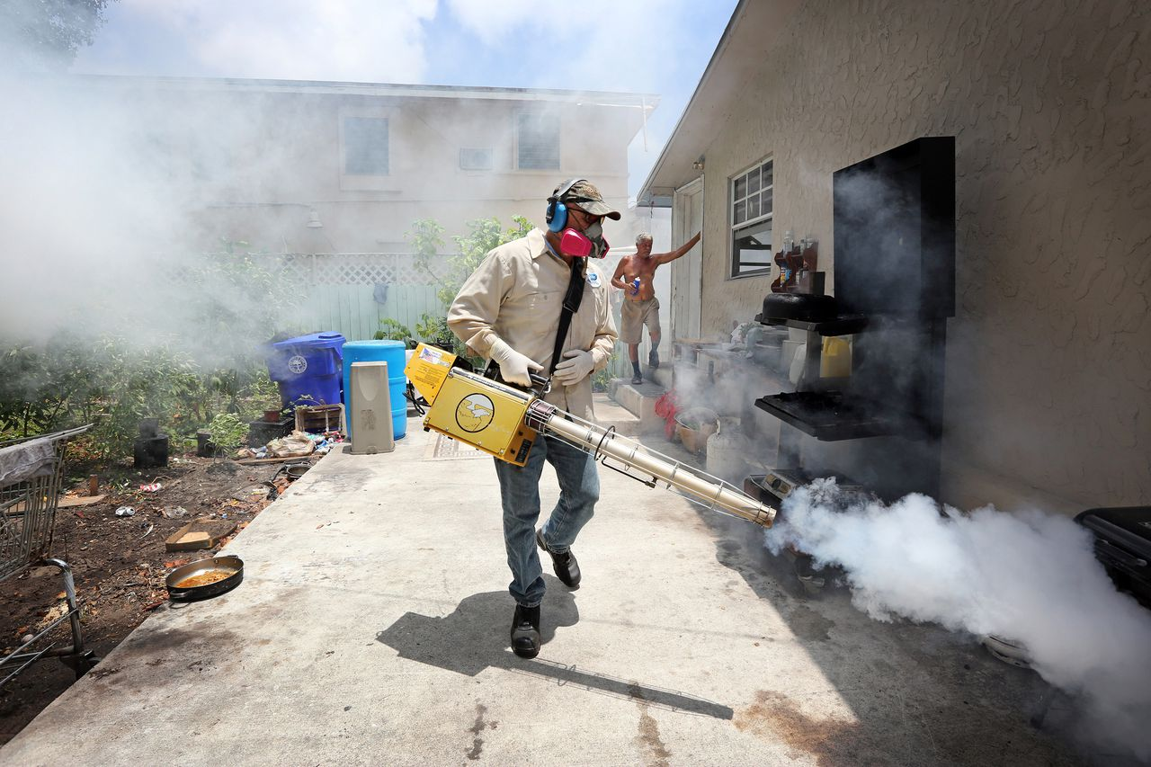 Dead Mosquitoes In Miami After Aerial Spraying