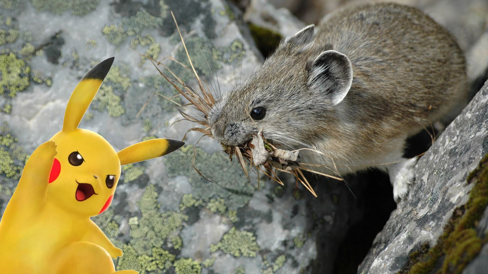The Verge Review Of Animals Pika Vs Pikachu The Verge
