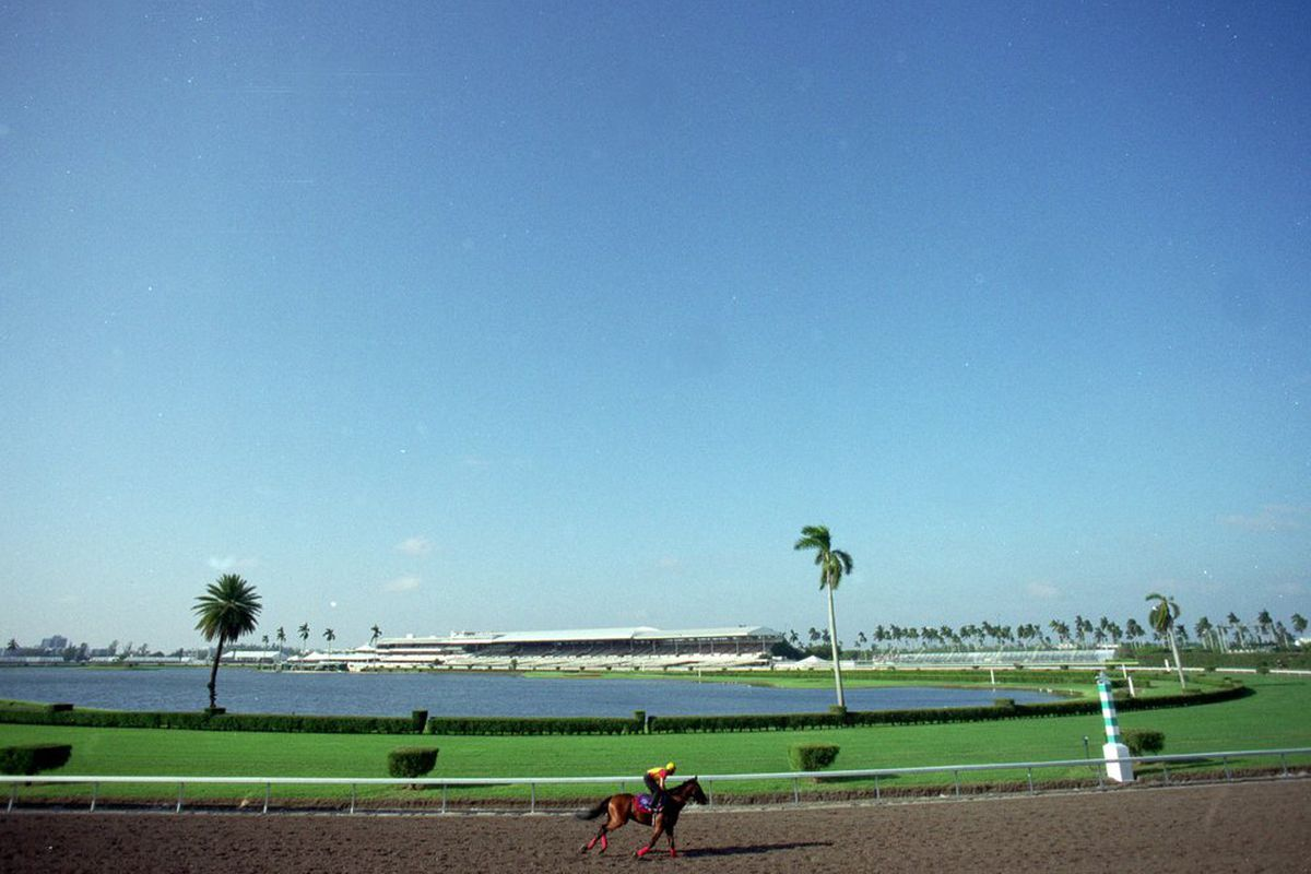 2011 Gulfstream Park Preview And Down The Stretch They Come