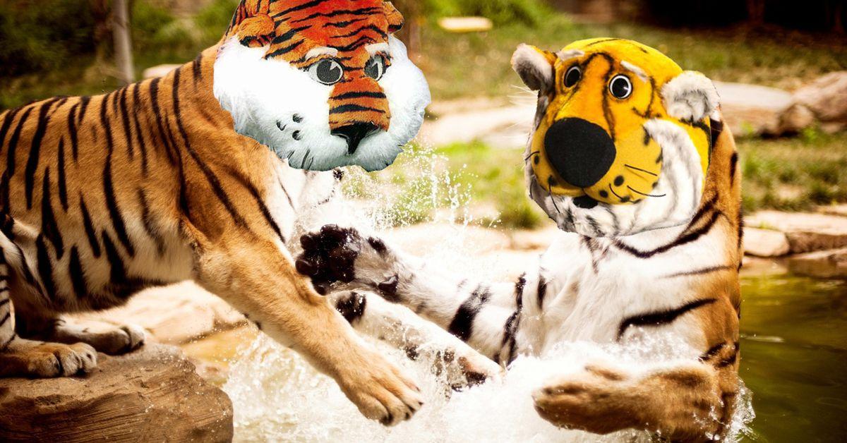 Tiger_fight