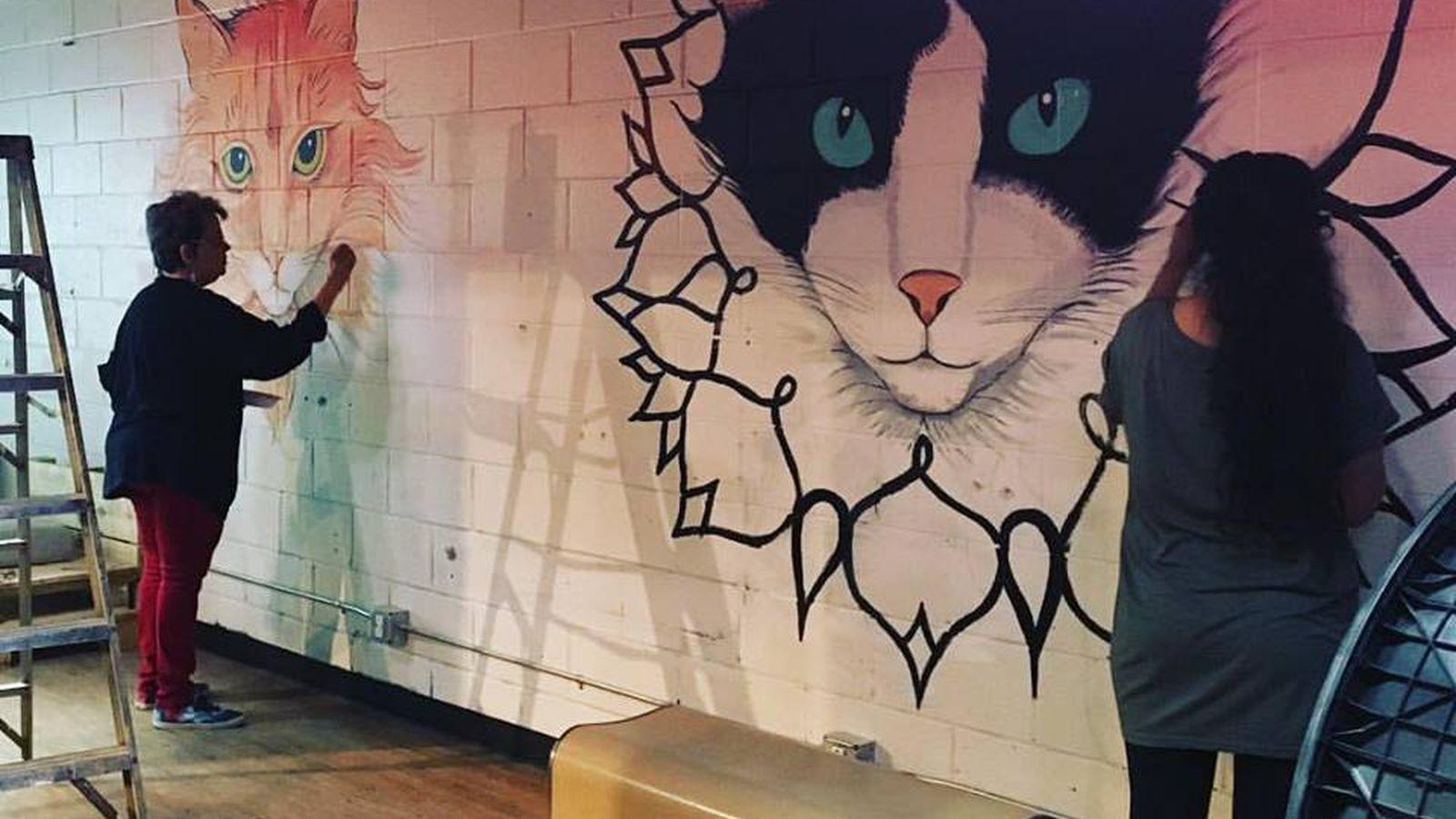 Los Angeles Cat Cafe Whisker