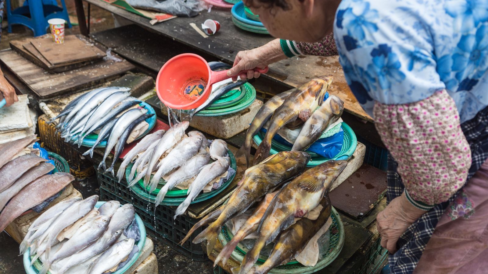 Finding a fresh caught lunch at south korea s largest fish for Fresh fish market los angeles