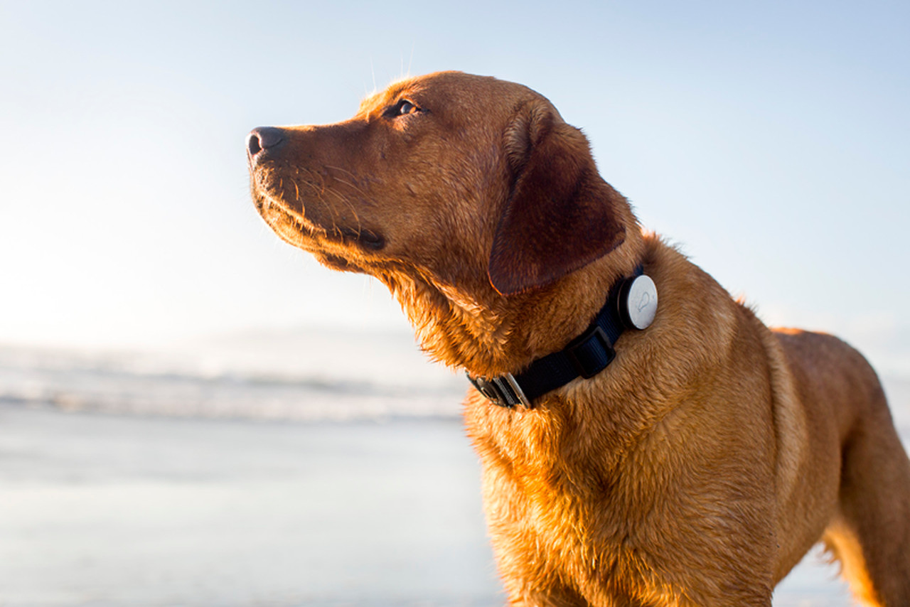 Best Gps Device For Dogs