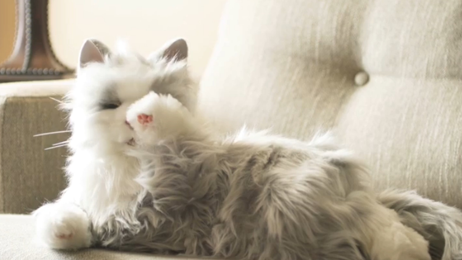 Hasbro's new robotic cats will make you feel a little less ...