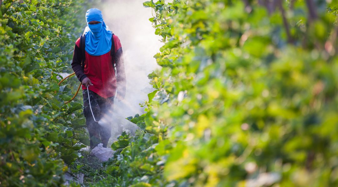 The developing world is awash in pesticides. There may be a better way.
