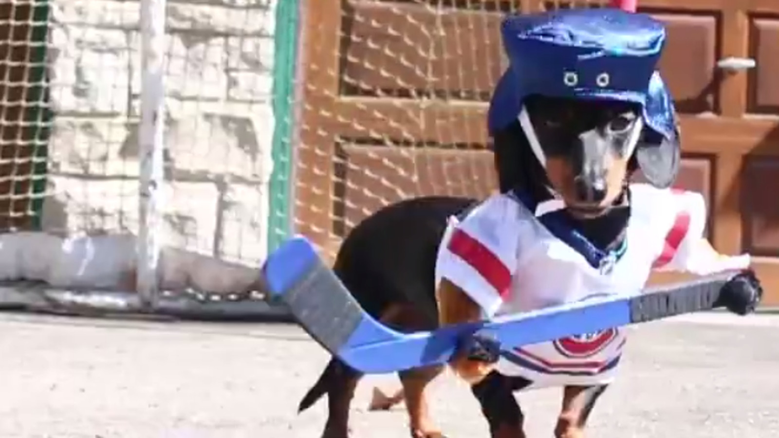 Yes Attaching Little Hockey Uniforms To Wiener Dogs Does