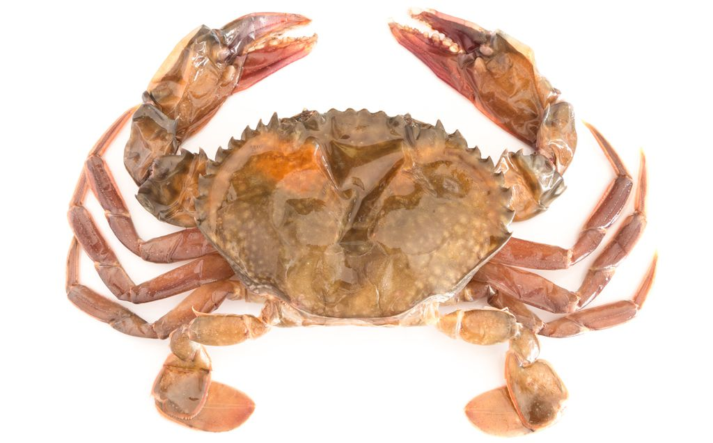Maryland crabs a guide to the east coast 39 s essential for Best white fish to eat