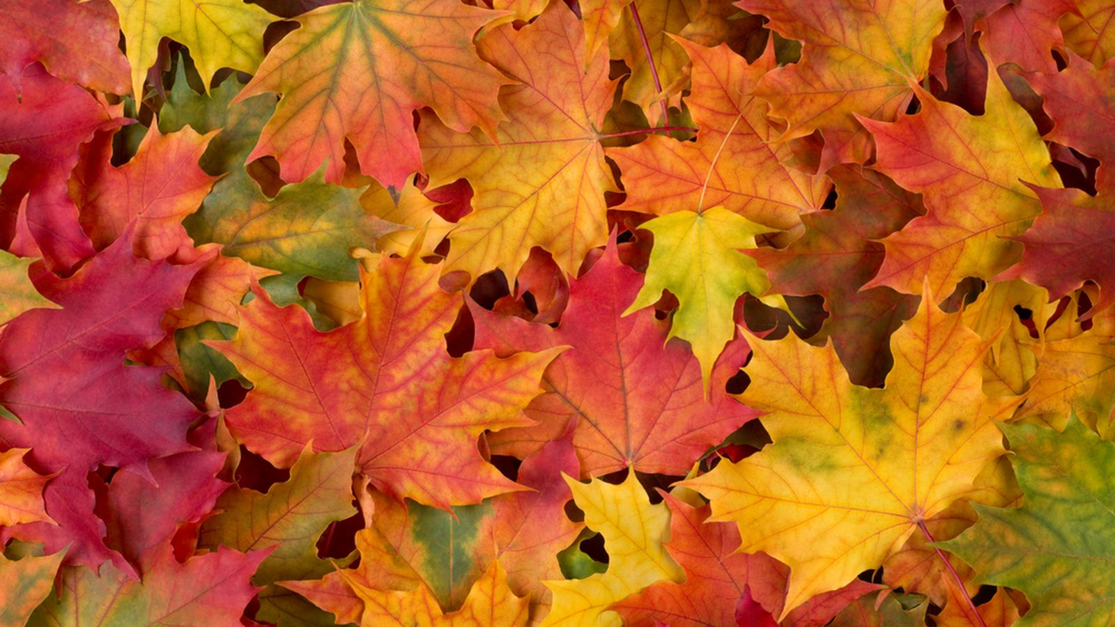 Your guide to the big games of fall