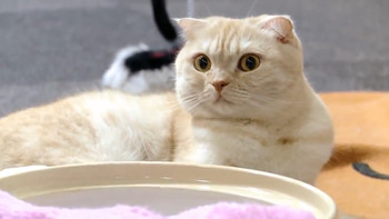 List Of Cat Cafes In Portland Or