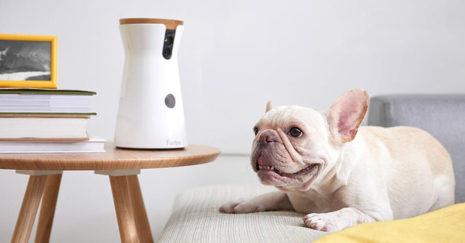 8 Home Tech Gadgets For Your Pet Curbed
