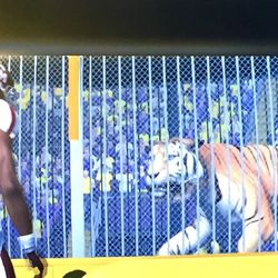 Yes, this man stopped on the way in to stare down the tiger.