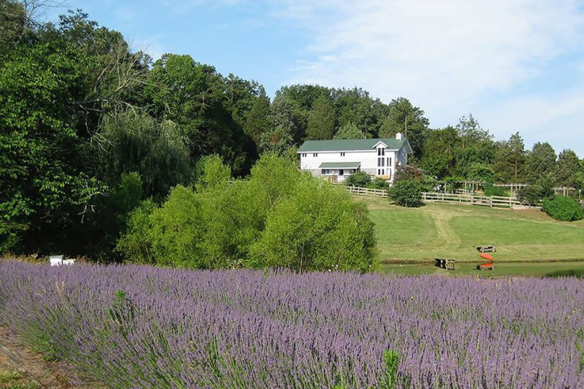 win this sweet organic farm a word essay curbed bluebird hill farm