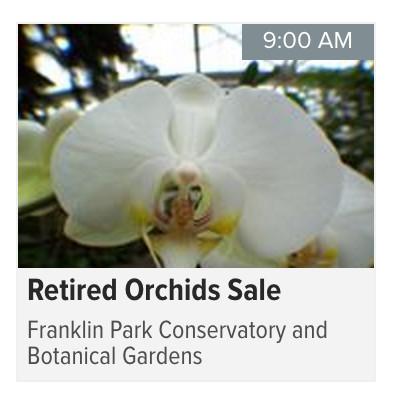 OrchidFestFuckYeah