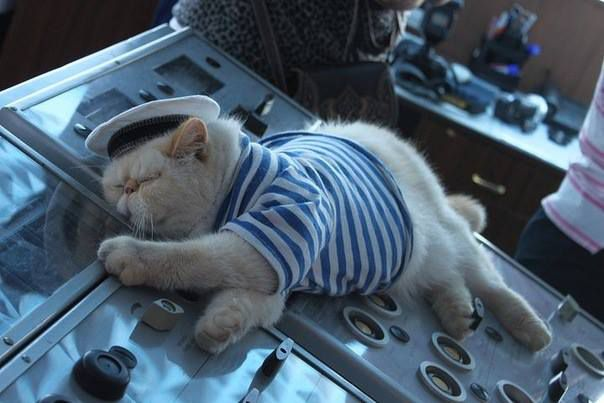 A Cat Captain on a Russian River Cruise
