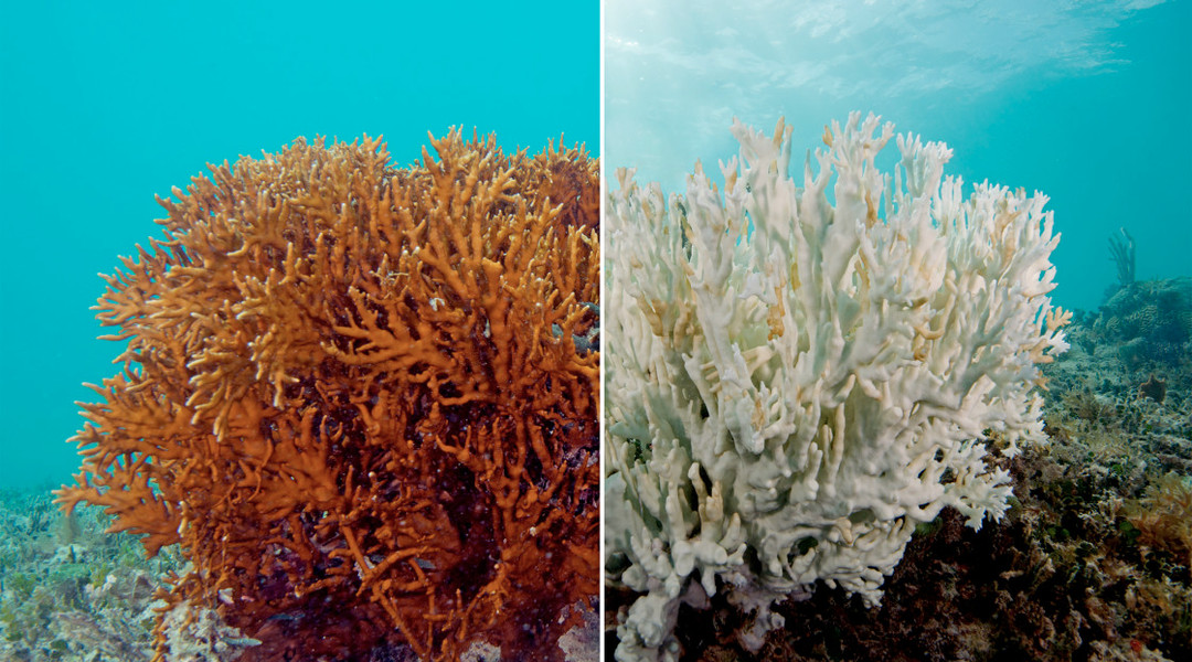 Scientists say the Great Barrier Reef is officially dying