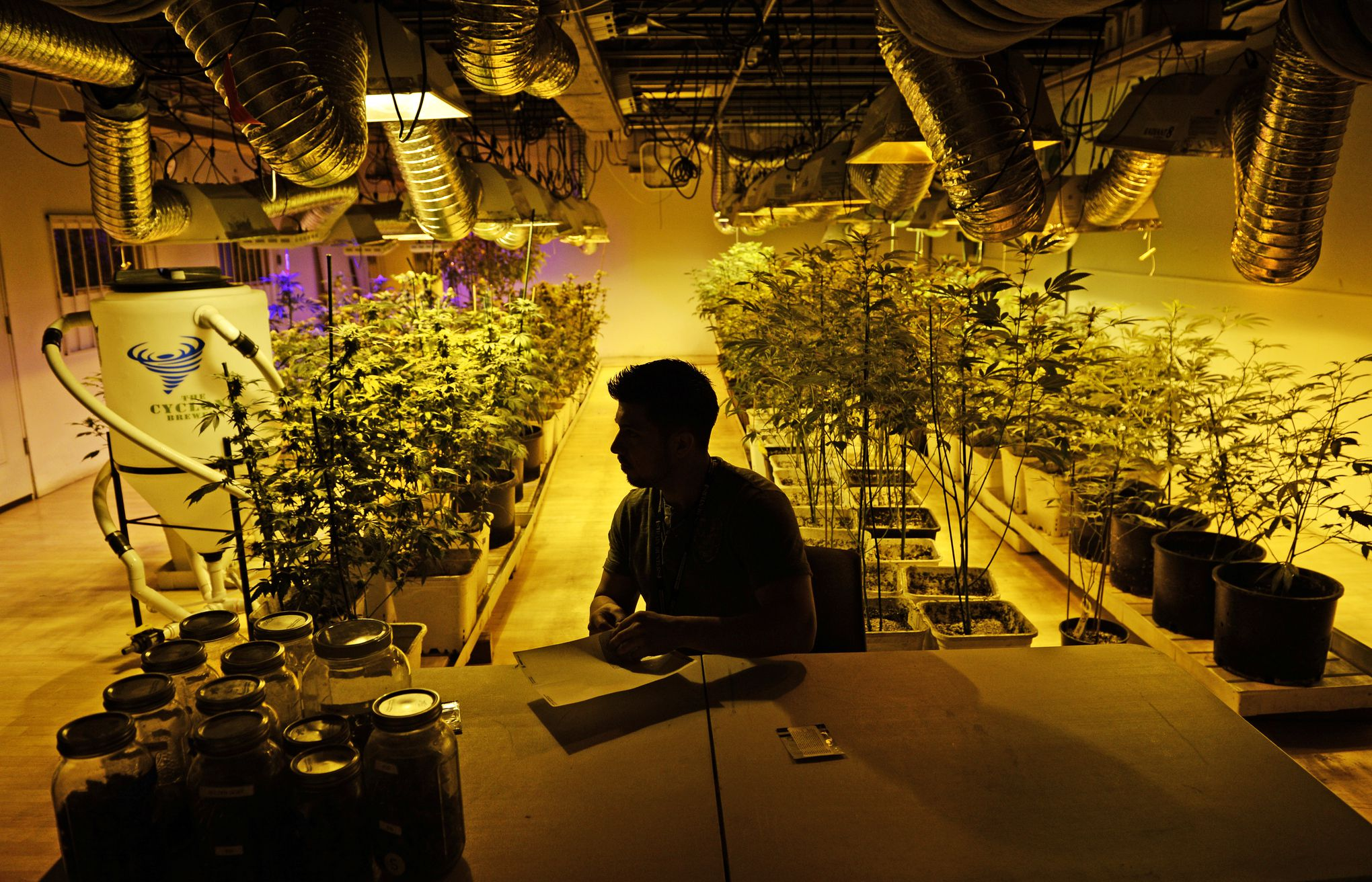 the sp of marijuana legalization explained  a marijuana business manager prepares for the first day of recreational s