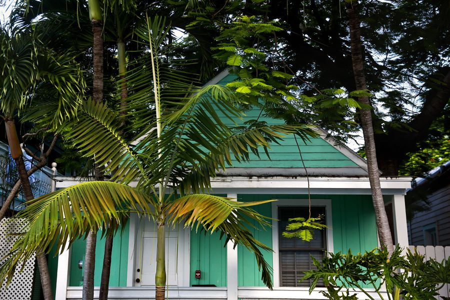 A teal green small home surrounded by palm trees.