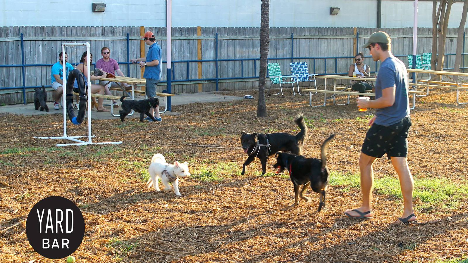 Dog Friendly Parks In New Orleans