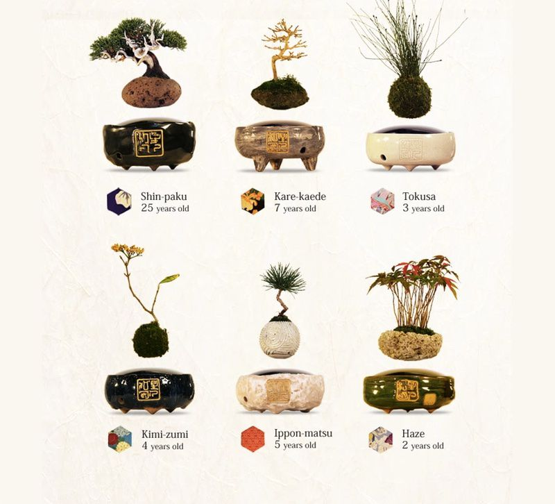 these floating bonsai trees are a moment of sci fi zen bought bonsai tree