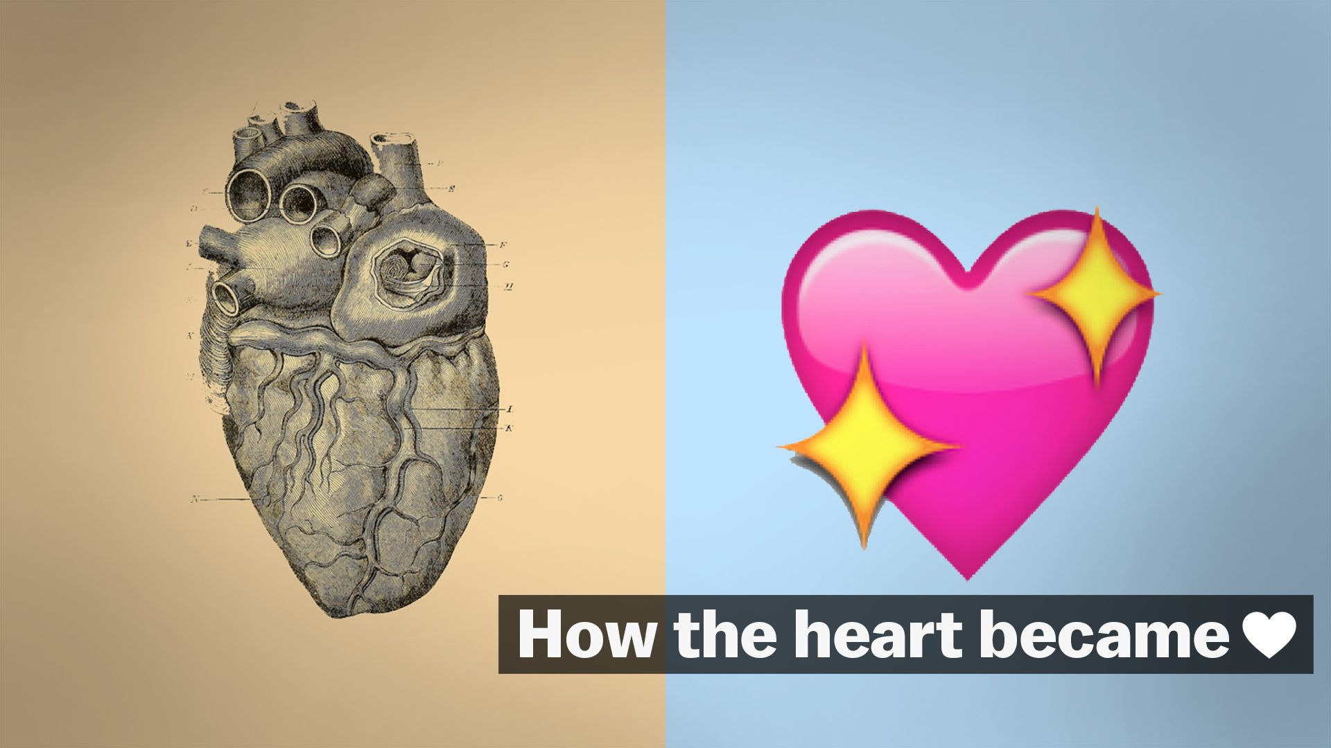 How the heart became vox biocorpaavc