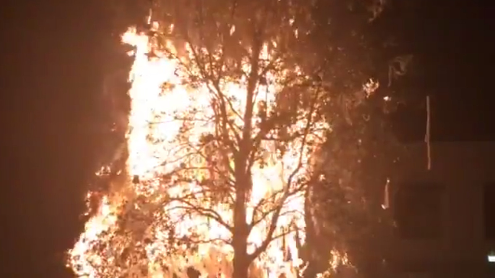 Auburn oak tree at Toomer's Corner set on fire during