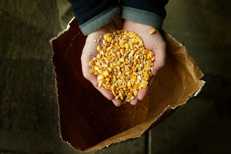 Moves To Grow GM Crops In Britain Rejected By British MPs