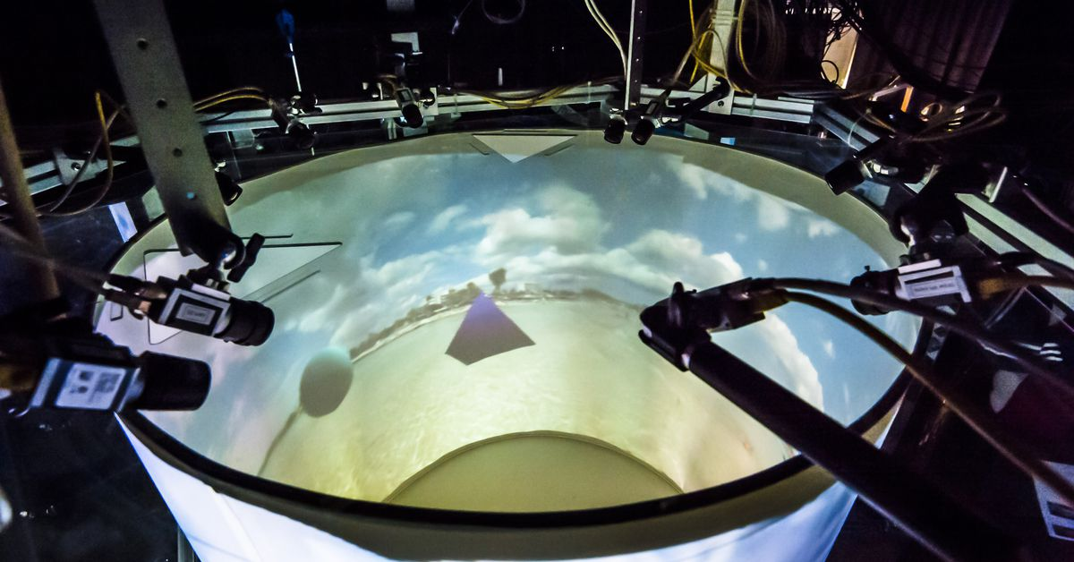 What we can learn from immersing mice, fruit flies, and zebrafish in VR