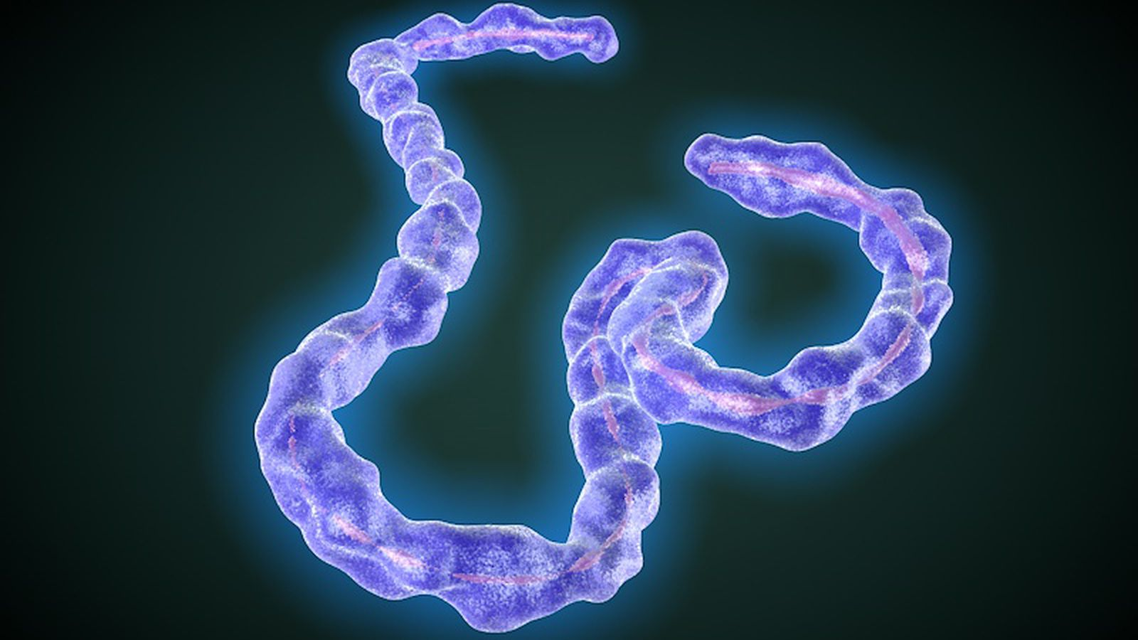 effects of ebola virus on humans essay