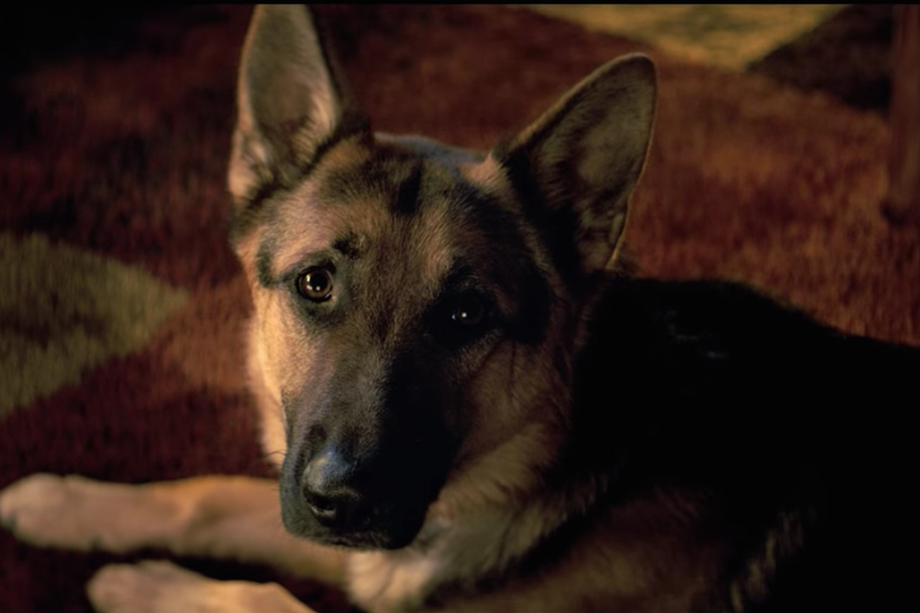 footage of apparent animal cruelty on movie set spurs boycott of a dog s purpose