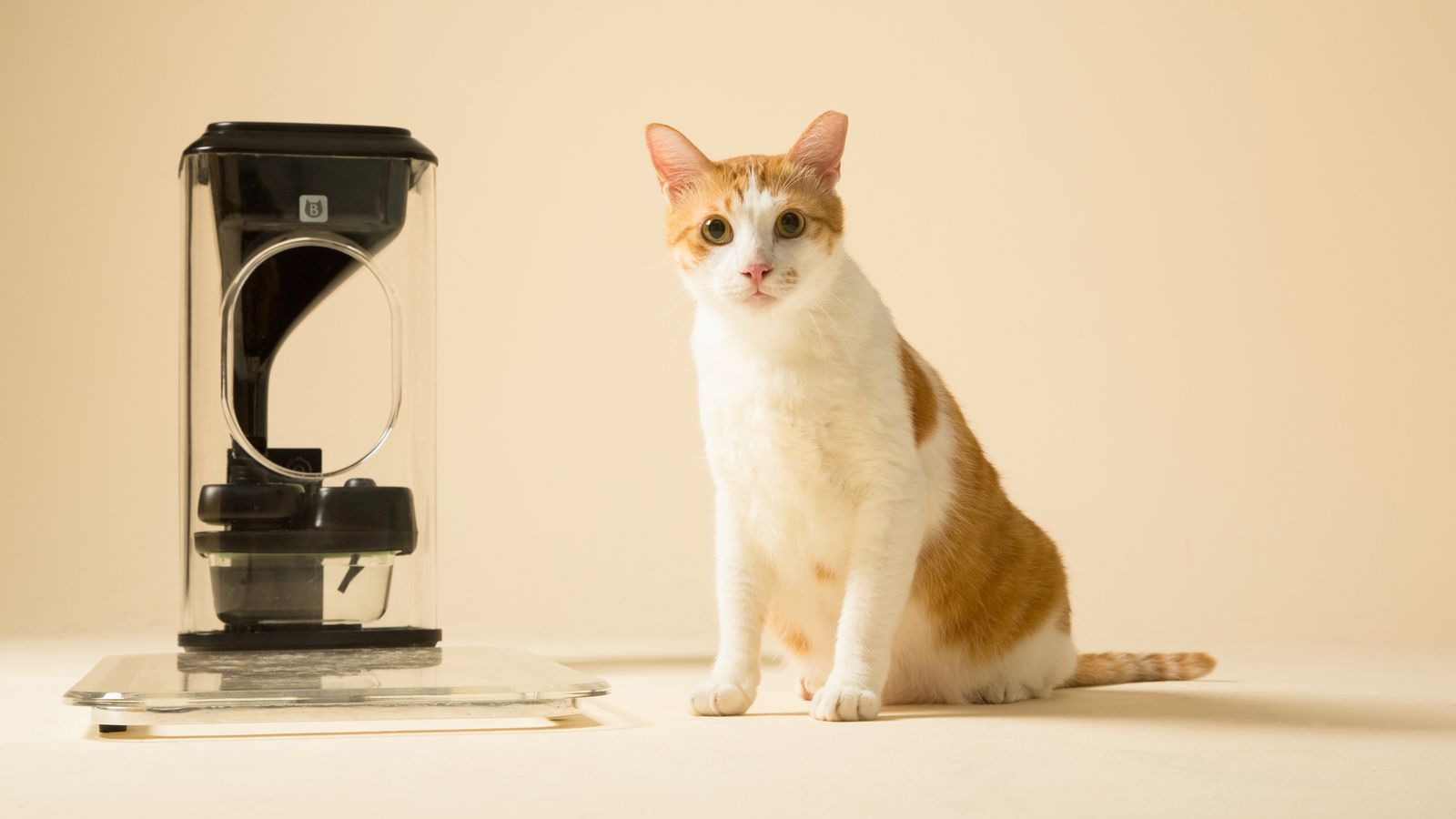 Feline Facial Recognition Will Make Your Cats Less Fat