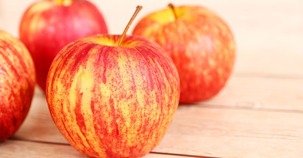 Honeycrisp Was Just The Beginning Inside The Quest To Create The Perfect Apple Vox