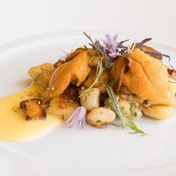 Seared gnocchi with uni, chanterelles, and mustard
