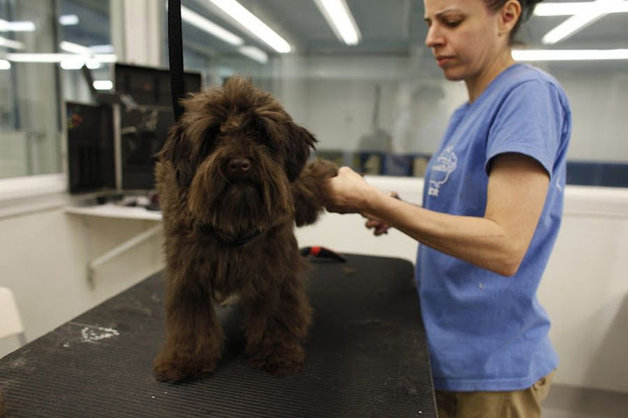 A peek inside the pet grooming salons of new york city for A bath and a biscuit grooming salon