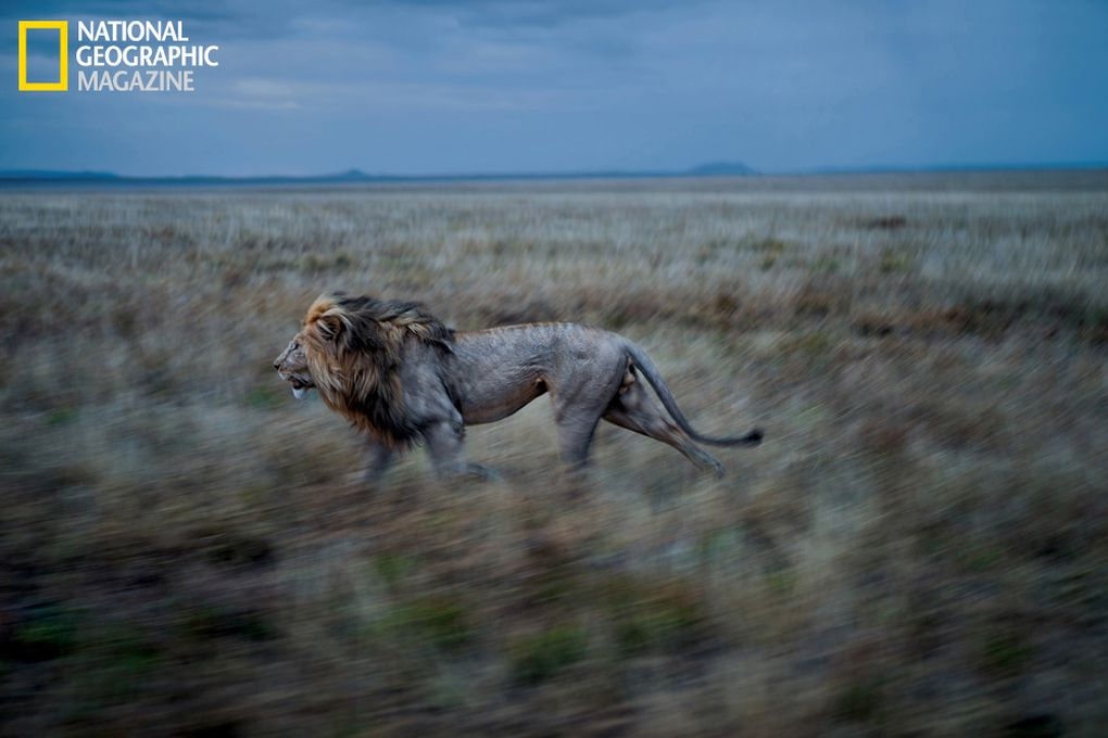 Lions mm7947 0813 007.1376048842