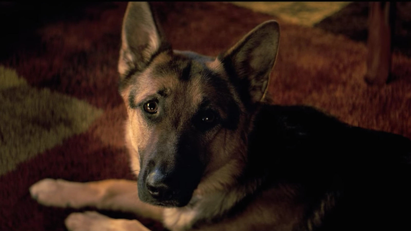 dogs purpose under fire after publishes leaked video german shepherd