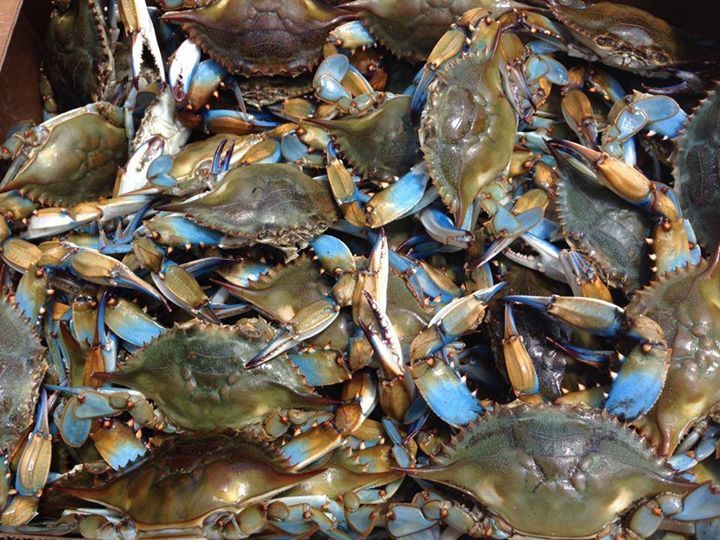 Out Of The Blue Crabs And Seafood Restaurant