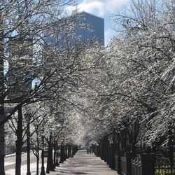 Along Centennial Olympic Park, the scene was downright gorgeous.