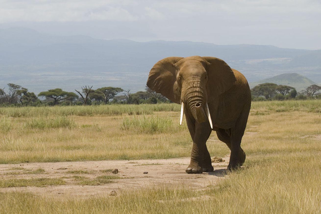 Short essay on elephant