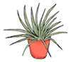 tiny-potted-plant-1.0.jpg