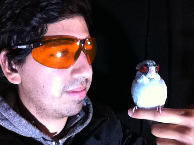 Adorable bird dons tiny goggles to fly through lasers