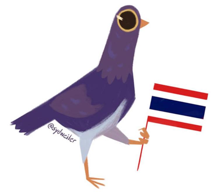 Proyecto Paloma Pasajera - ¿Qué hace diferente a esta paloma
